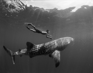 The World's Largest Fish with Aqua-Firma - Image 2