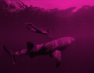 The World's Largest Fish with Aqua-Firma - Image 1