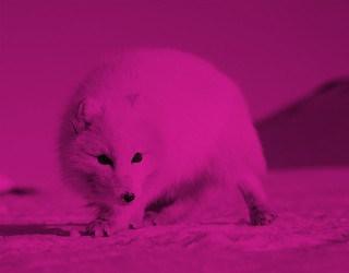 SpitsbergenAquaFirmabyRoosterPRimgPink