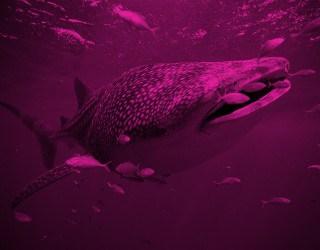 'Finding Dory' Adventure with Aqua-Firma - image 1