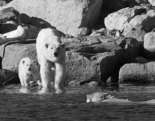Aqua-Firma Raising the Profile of Wilderness Travel - image 1