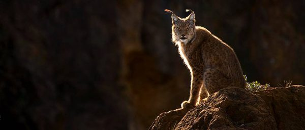 World's Greatest Predators in Spain with Tatra Photography - Image 3