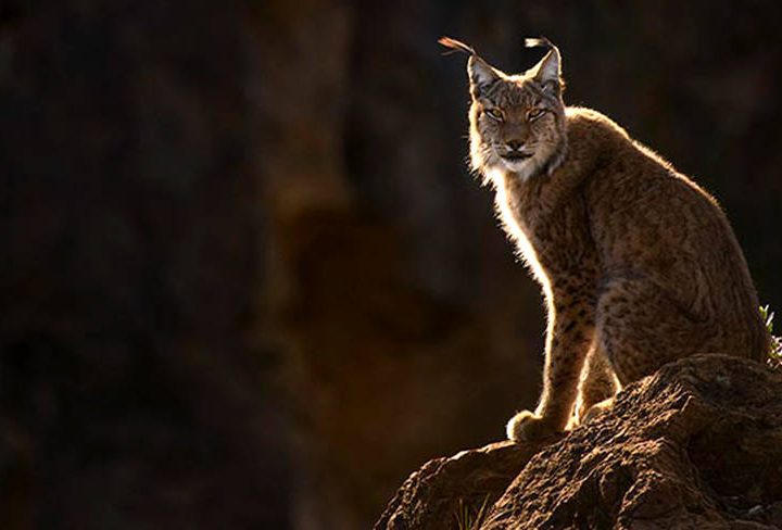 Tatra Photography Announce Package in Spain – World's Great Predators