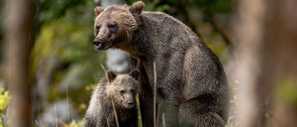 Photograph Grizzly Bears in Alaska with a Tatra Photography Tour - Image 3
