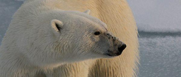 Aqua-Firma Releases Its 'Ultimate Spitsbergen' Portfolio - Image 3