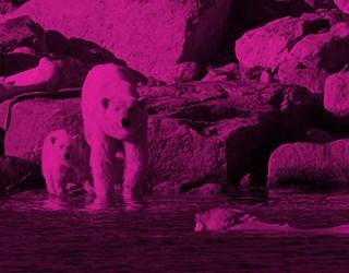 Aqua-Firma Raising the Profile of Wilderness Travel - image 2