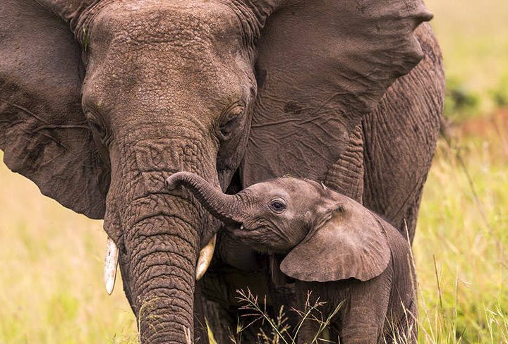 World Elephant Day – Things You Never Knew About Elephants