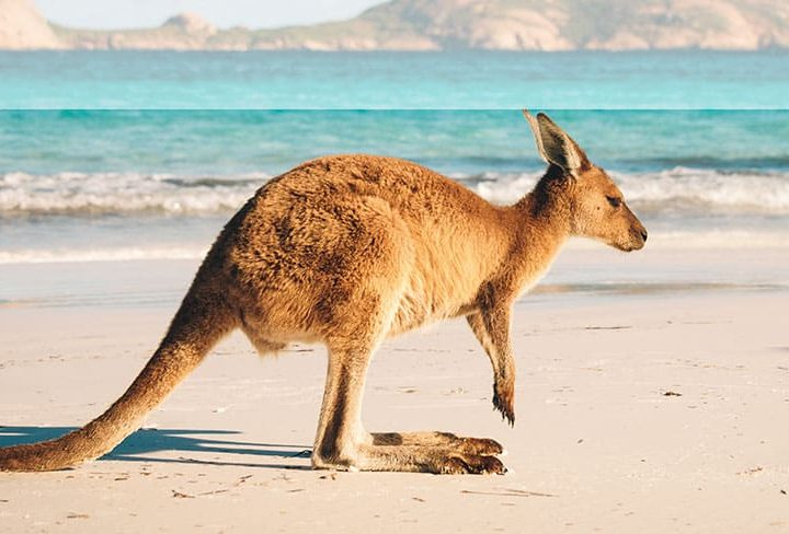 Flight Centre Releases 2018 Australia Travel Trends Report and Holidays Down Under for just £50