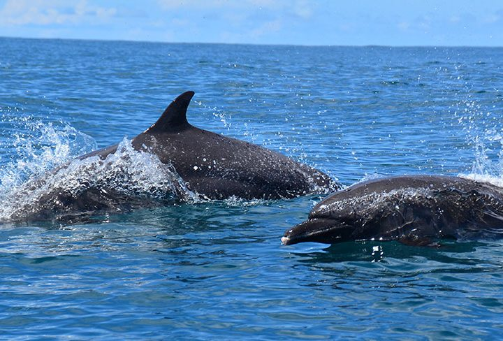 World Oceans Day and Responsible Tourism