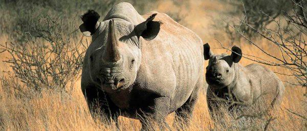 SafariBookings.com Top 10 Safari Parks by RoosterPR