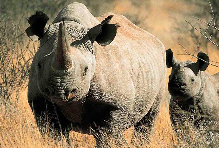Top Ten African Safari Parks Revealed