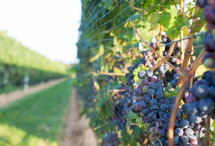 Best Vineyards to Visit on Long Island, New York