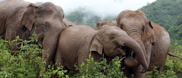 RickShaw Travel Elephant Day by RoosterPR