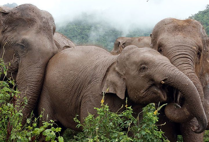 World Elephant Day: Five Meaningful Ways to See Elephants with Rickshaw Travel