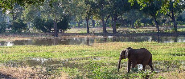 Safaribookings.com Explore Africa by Safari by RoosterPR
