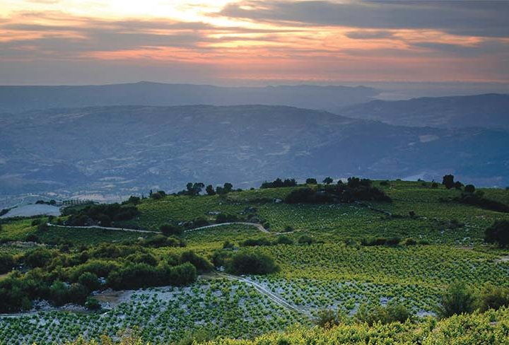 Cyprus For Wine-Lovers