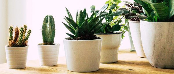 A scattered collection of house plants in clay pots